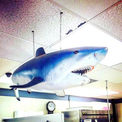 Ceiling shark