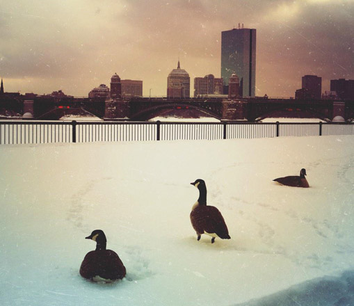 Birds by the frozen Charles River