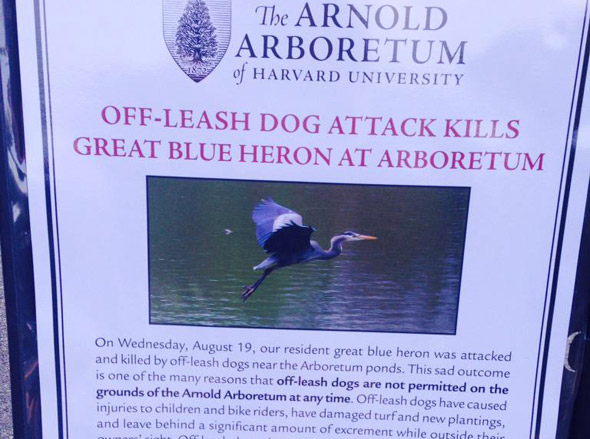 Flier posted at Arnold Arboretum about killer dog