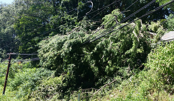 Tree crashes into wires along Riverside Line on the MBTA in Newton
