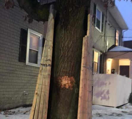 Tree on Peaceable Street