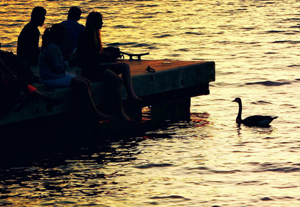 Goose by the Charles River Esplanade at sunset