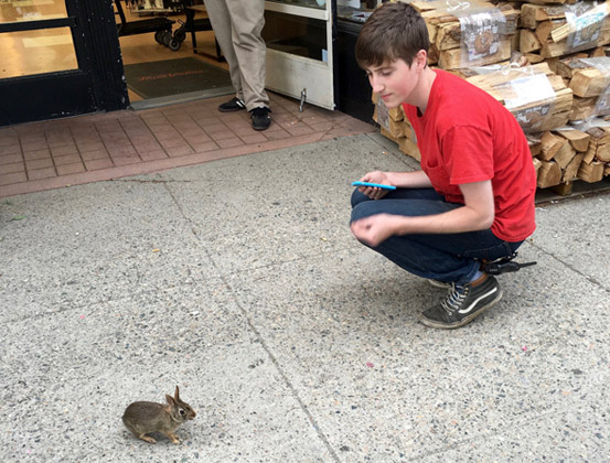 Boy and bunny on Beacon Street in Brookline