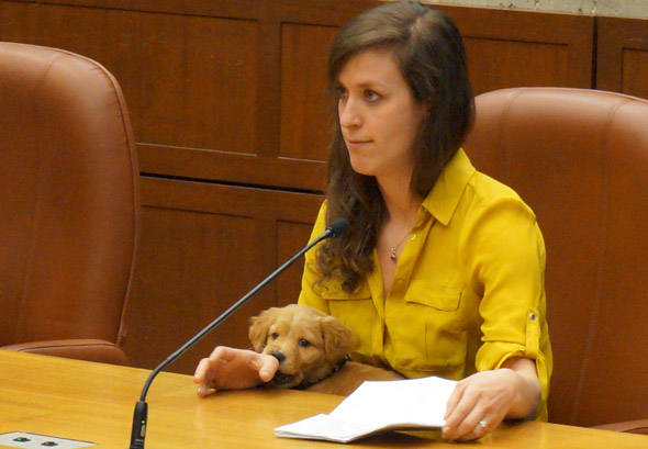 Hope the dog at Boston City Council hearing on puppy mills