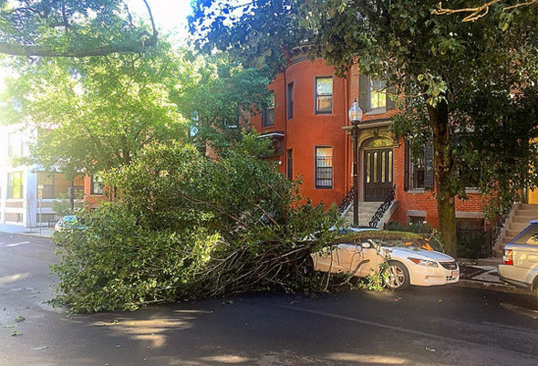 Downed tree in the South End