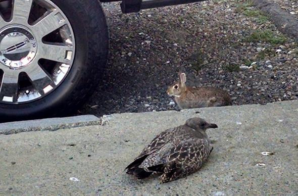 Rabbit and tern in Boston's Back Bay