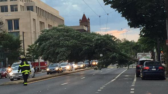 Tree down on Massachusetts Avenue near Harvard Square