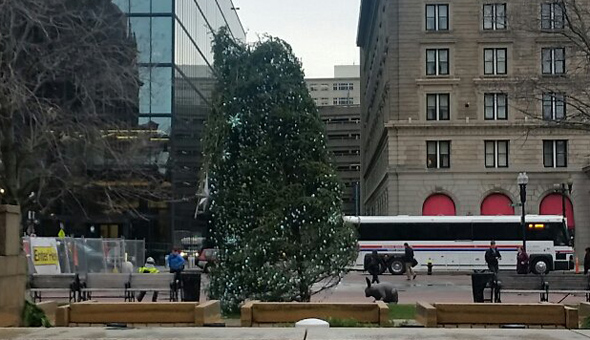 Cople Square Christmas tree