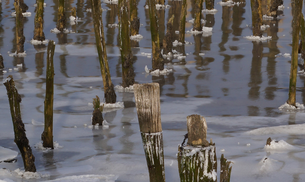 Wood and ice in the Neponset River
