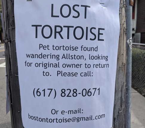 Tortoise found wandering around Allston