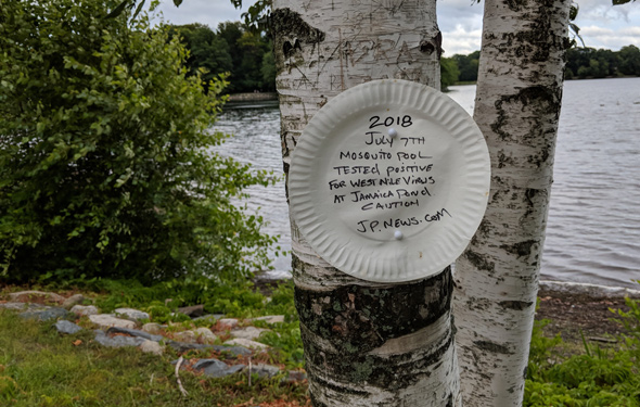 Warning about West Nile Virus on a paper plate at Jamaica Pond