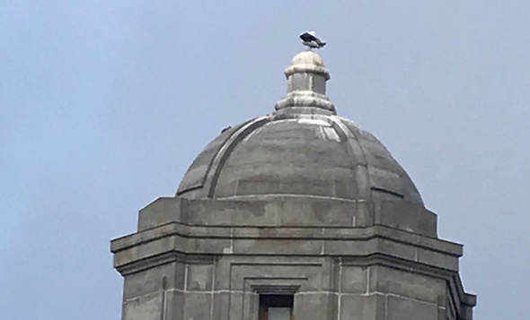 Seagull and seagull poop atop one of the towers of the Longfellow Bridge