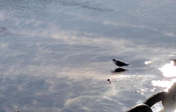 Seagull in sea smoke in Boston Harbor