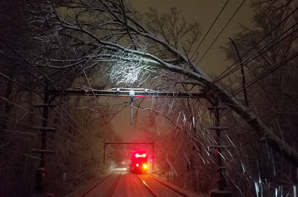 Tree on wires on the Riverside Line