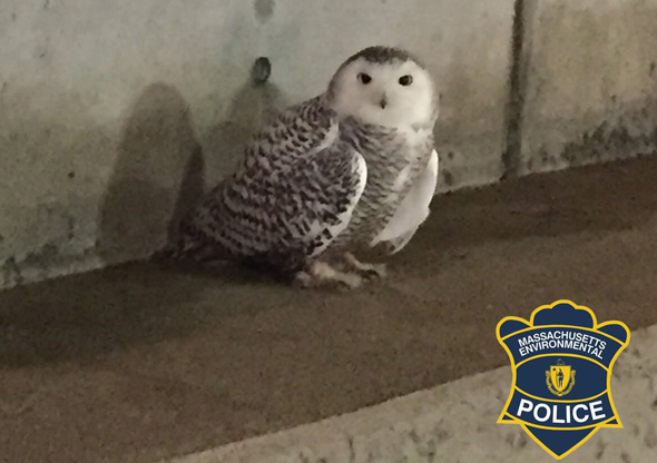Owl in the O'Neill Tunnel