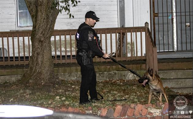 Ballistic dog at scene