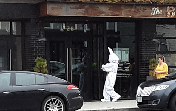 Big bunny hops into South Boston bar