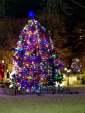 Nova Scotia Christmas tree on Boston Common