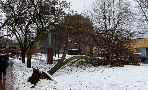 Tree down in Seven Hills Park in Somerville