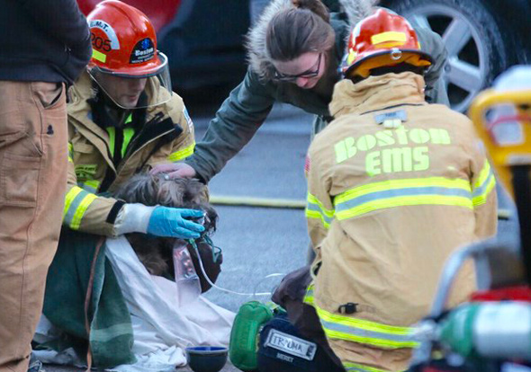 Dog being given oxygen at Jamaica Plain fire