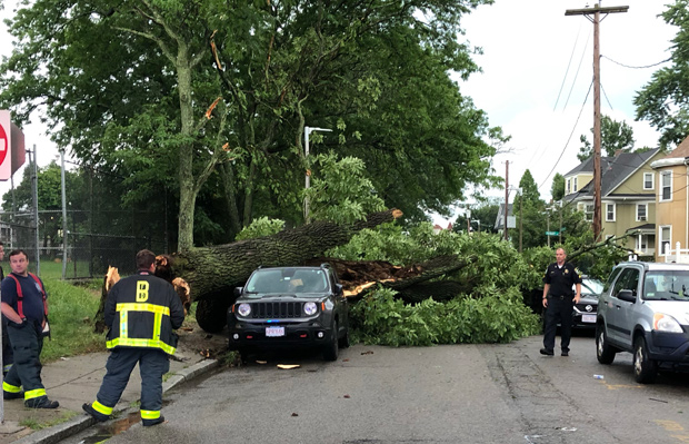 Tree down in Dorchester