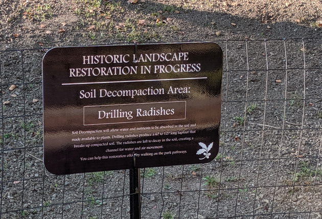 Sign about the drilling radishes that will be planted along Perkins Street