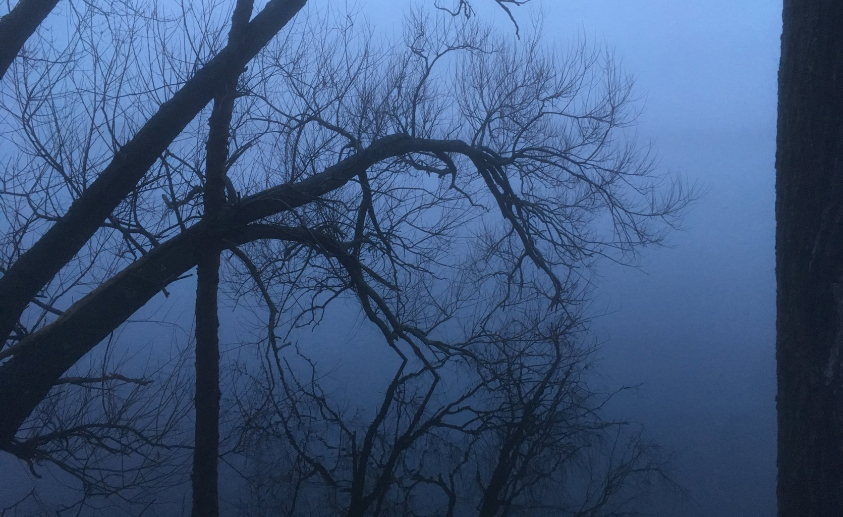 Trees in the fog at Fresh Pond
