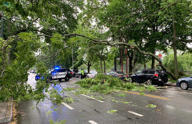 Tree down on Mt. Auburn Street in Cambridge