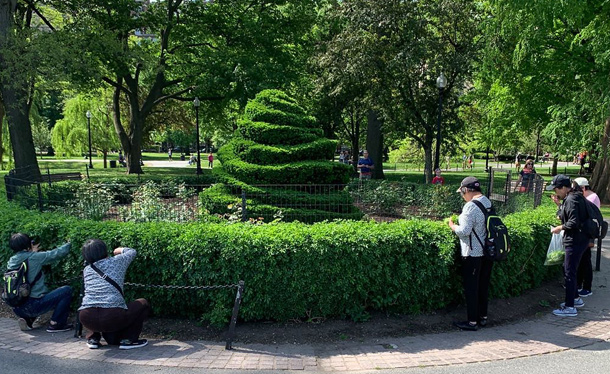 Eating a shrubbery in the Public Garden
