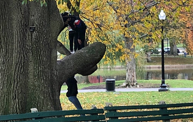 People on trees in the Public Garden
