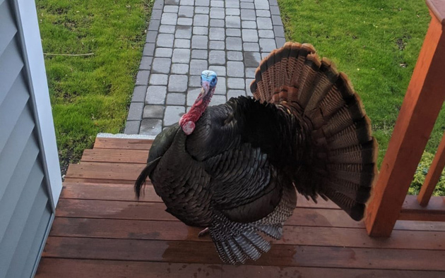 Porch turkey