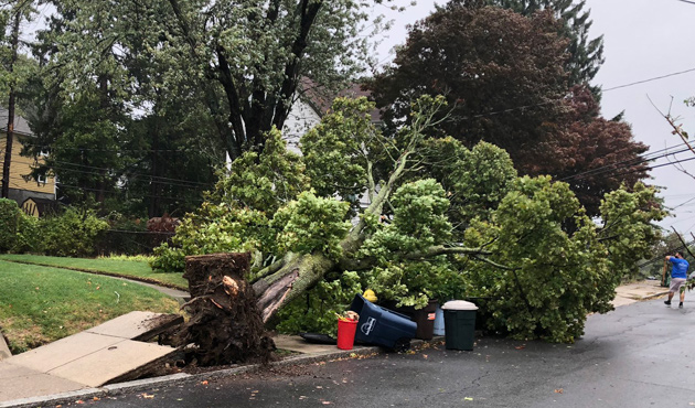 Tree down in Roslindale
