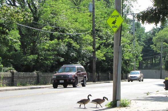 Missing geese-crossing sign