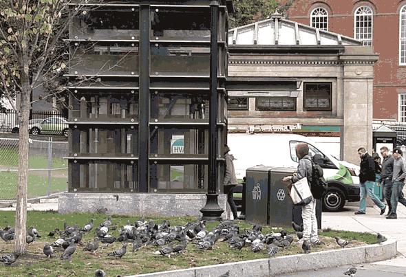 Woman feeding pigeons at Park Street