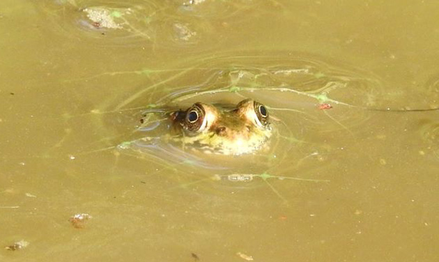 Frog in the mud