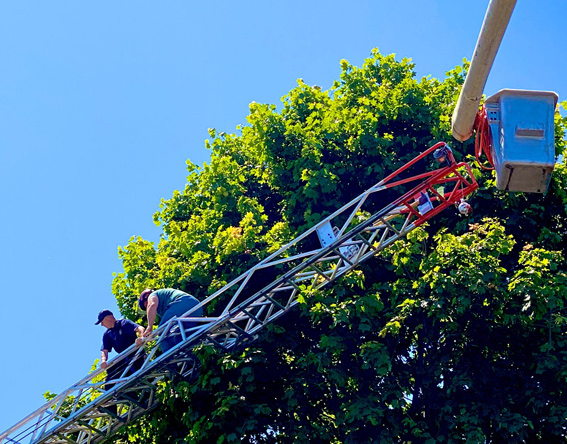 Leading a tree trimmer down a fire ladder