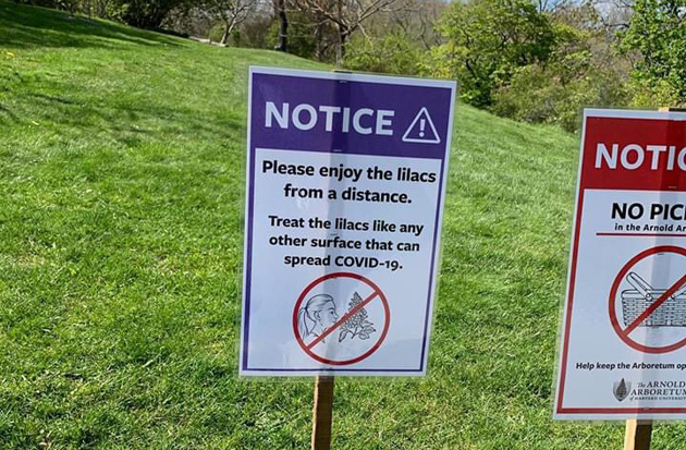 Sign warns of Covid-19 risk from sniffing lilacs