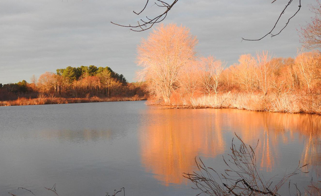 Golden trees on Cow Island Pond in West Roxbury