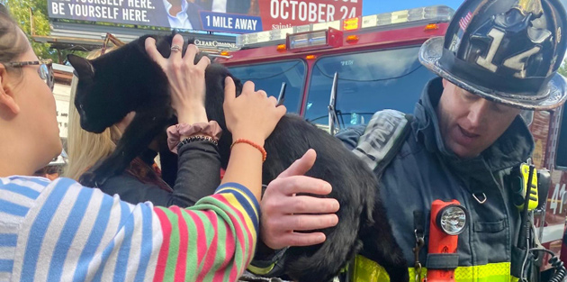 Cat being returned to owner at Brighton fire