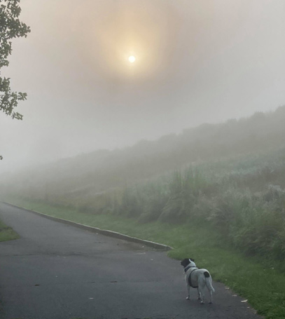 Hazy start to the day at Millennium Park