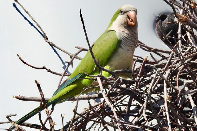 Polly wanna nest?