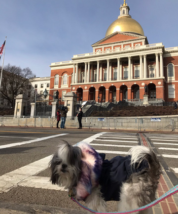 Dog at the State House