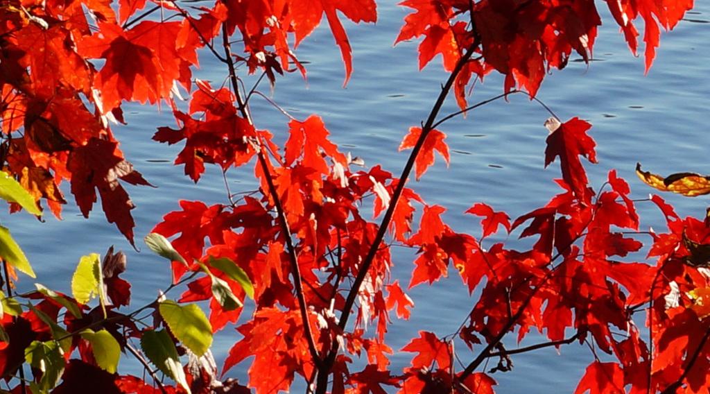 Fall comes to Jamaica Pond
