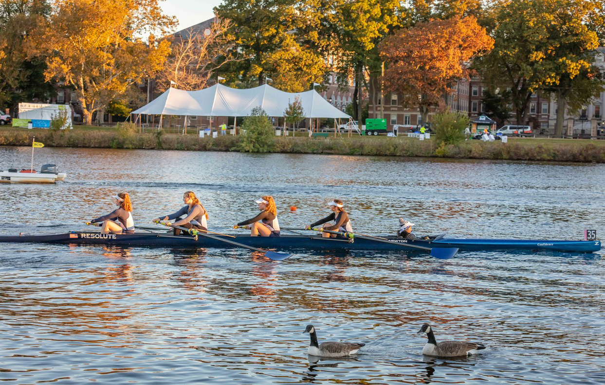 Rowers and geese