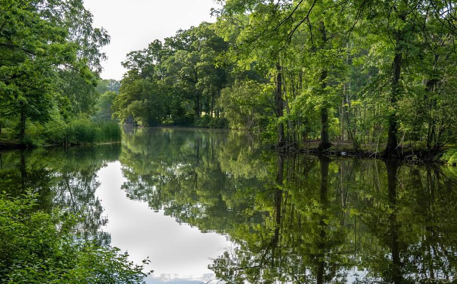 Scarboro Pond in Franklin Park