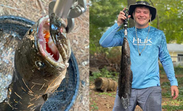 Snakehead and the guy who caught it