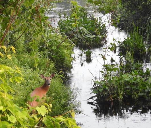 Where's the deer in Millennium Park