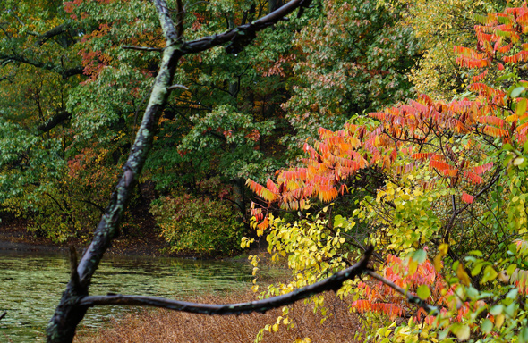 Ward's Pond in the fall