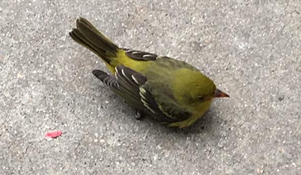 Pretty bird in downtown Boston