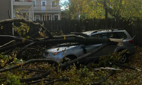 Car hit by tree in lower Allston